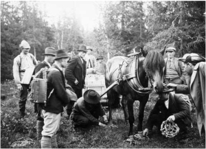 "One of several photos showing the beaver box being transported. In this case, special marsh shoes are being put onto the horse pulling the beaver box. Published in Eric Festin, ""Bäverns Återinplantering"" in Jämten (1922). Photo by Nils Thomasson."